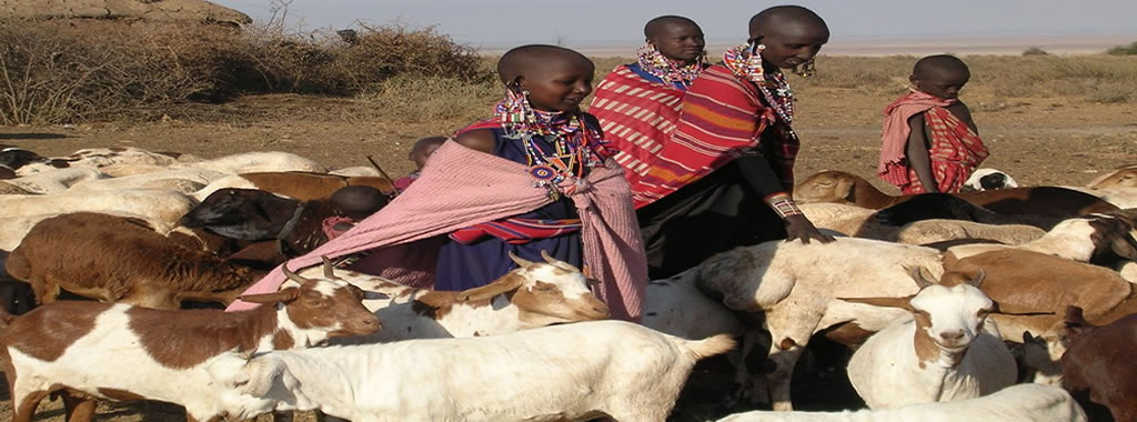 Maasai pastoralists with a flock of sheep and goats