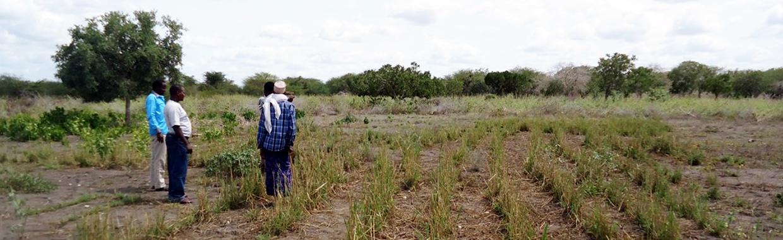 Grazing land in Marsabit