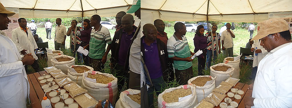 Range grass seeds on display during a field day