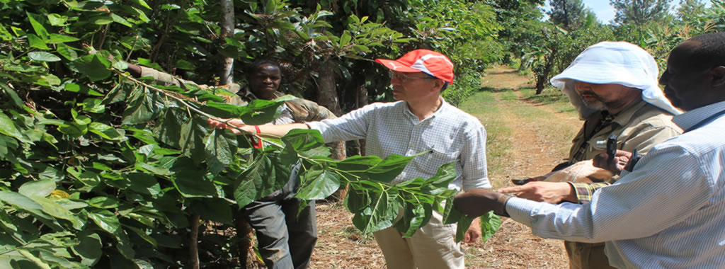 Scientists visit a mulberry plantations at KALRO Thika
