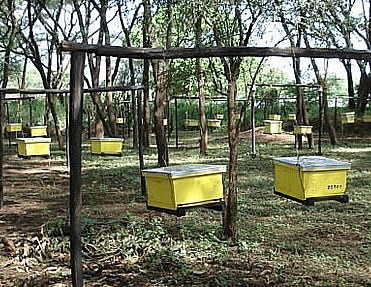 Improved beekeeping husbandry